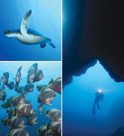 Scuba Diving - butterfly fish clusters and green sea turtle
