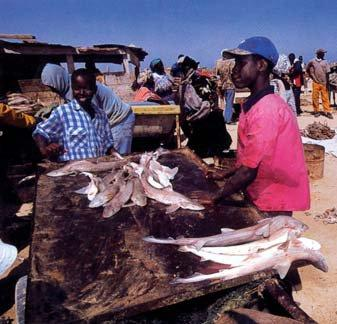 Fish offered in Mauritania